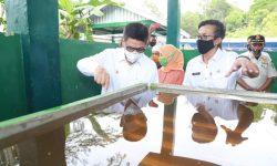 UPTD KPH Tarakan Bangun Pabrik Penyulingan Kayu Putih