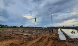 Menengok Potensi Pertanian Desa Tanjung Batu di Kukar Lewat Lahan Tidur
