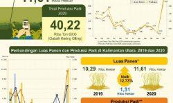 Produksi Beras Kaltim 2020 Diperkirakan Naik 3,56 Persen
