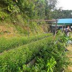 Melihat Prospek Besar Pembibitan Tanaman Kayu Putih di Desa Purwajaya Kukar