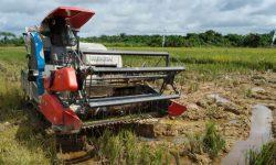 Menengok Prospek Cerah Pertanian di Muara Kaman Selain Padi dan Palawija