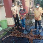 Polisi Tangkap 3 Pelaku Perdagangan Organ Dan Kulit Harimau Sumatera