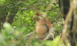 Dihuni Monyet dan Bekantan, Mangrove Belagaone Nunukan Dikunjungi 1.000 Orang/Minggu