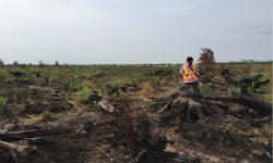 Perusahaan Ini Dihukum Ganti Rugi dan Pemulihan Lingkungan Rp137,6 miliar