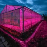 PLN Kembangkan Lampu Ultraviolet untuk Pertanian Hidroponik