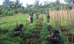 Berkebun, Cara Prajurit Yonif 611/Awl Tingkatkan Ketahanan Pangan Saat Tugas di Perbatasan PNG