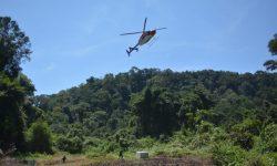 Menengok Pelepasliaran 10 Orangutan di Hutan Kalimantan di Masa Pandemi Covid-19