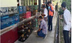 Rumah di Samarinda Digerebek, Aparat Sita 66 Ekor Burung Dilindungi Siap Jual