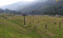 Greenbelt Bendungan Tukul Ditanami 655 Pohon Bernilai Ekonomi