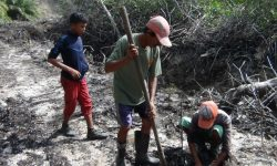PT Sentosa Kalimantan Jaya Rehabilitasi Hutan Mangrove di Tanjung Batu