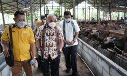 Disaksikan Gubernur Isran, Pertamina Salurkan Rp20,6 M Buat 206 Peternak Sapi di Kaltim