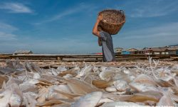 Andi Akmal : Gali Potensi Kekayaan Laut Indonesia Rp19 Ribu Triliun