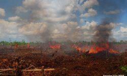 Perubahan Iklim Global Berdampak Sama dengan COVID-19
