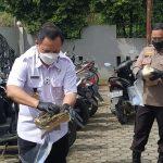 Dimusnahkan, BNN Bakar Sebagian dari 4,4 Kg Ganja di Samarinda
