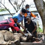 Wagub Kaltim Hadi Mulyadi Sudah Jagal 23 Ekor Hewan Kurban