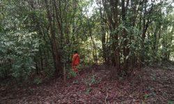Cerita Tim SAR di Tengah Pencarian Amiruddin yang Hilang di Hutan Anggana di Kukar