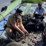Menengok Geliat Ekonomi Nelayan di Muara Wis di Masa Pandemi COVID-19