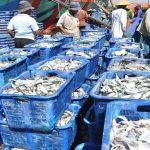 Empat Syarat Ekspor Produk Perikanan ke Tiongkok