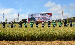 Panen Raya di Kukar yang Sebelumnya Lahan Sulit Dikelola, Pangdam: Luar Biasa!