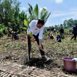 Antisipasi Perubahan Iklim, Presiden Jokowi Tanam Mangrove Bersama Masyarakat