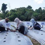 Tanam Perdana, Bupati: Pemkab Berau Support Petani Porang