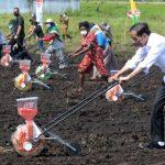 Presiden Jokowi: Tingkatkan Produktivitas Sektor Pertanian di Papua Barat
